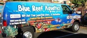 Blue Reef Aquatics Tropical Fish – Tropical Fish Store Las Vegas