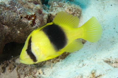 Blue Reef Aquatics Tropical Fish Products